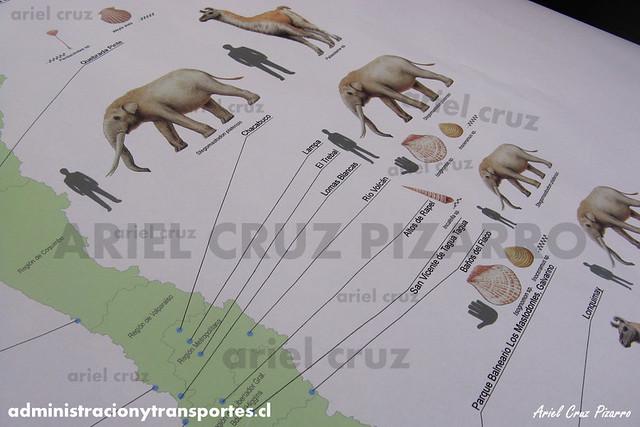 DPC2013 - Paleontología