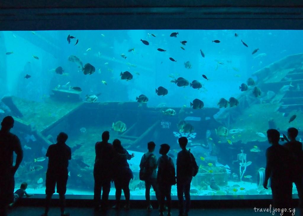 travel.joogo.sg - SEA Aquarium 7