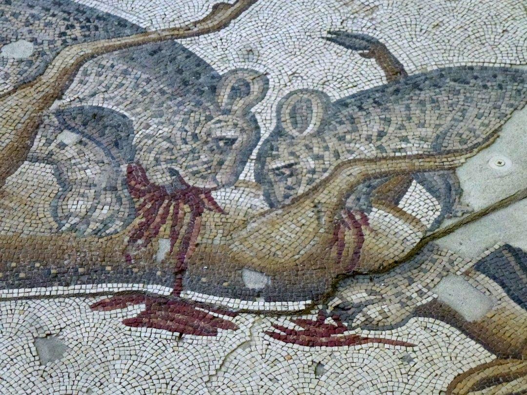 Turquie - jour 24 - Derniers instants à Istanbul - 38 - Musée des mosaïques du Grand Palais de Constantin - Büyük Saray Mozaikleri Müzesi