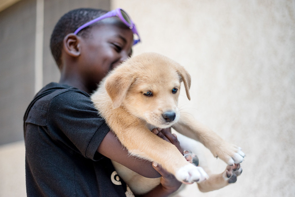 Child carrying puppy.