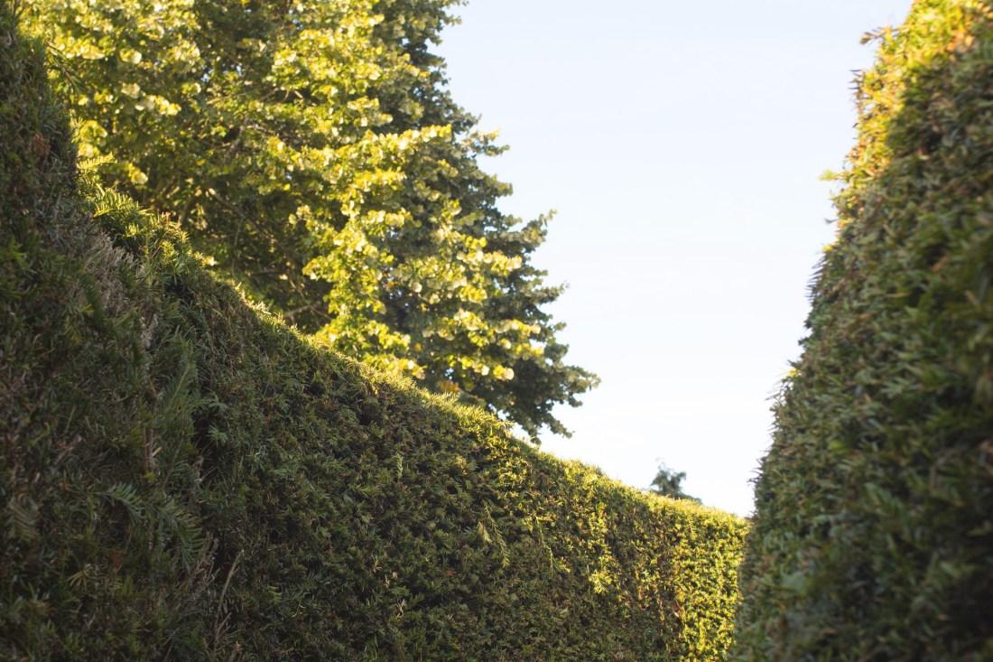 3 Alveston pastures farm maze hedges