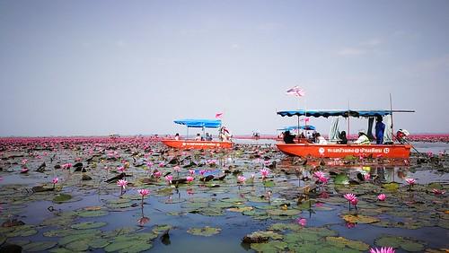เรือใหญ่ ล่องชมบัวแดง ราคา 500 บาท/ลำ นั่งได้สูงสุด 8 คน