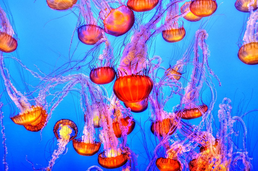 Imagen gratis de medusas en alta resolución