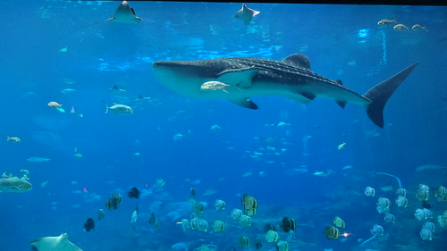 Georgia Aquarium, Aug 2015