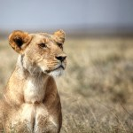 Our Tanzania Safari Part 2 – Serengeti National Park
