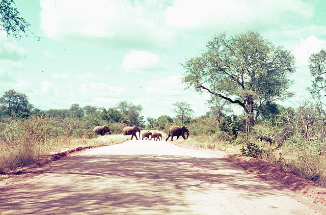 Krugerpark in the late 60's or early 70's