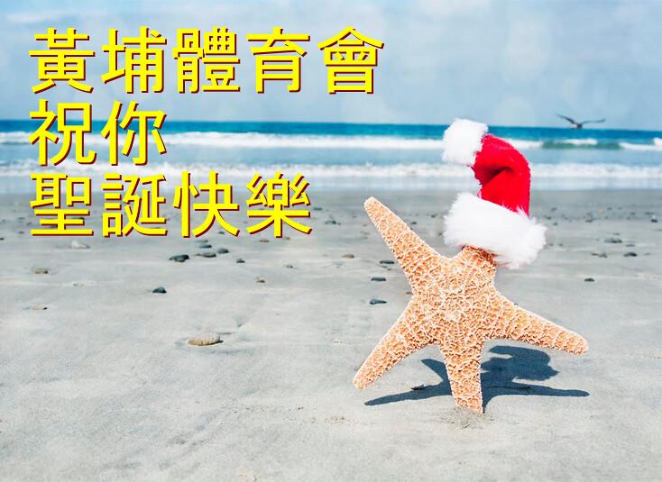 starfish-xmas-2016