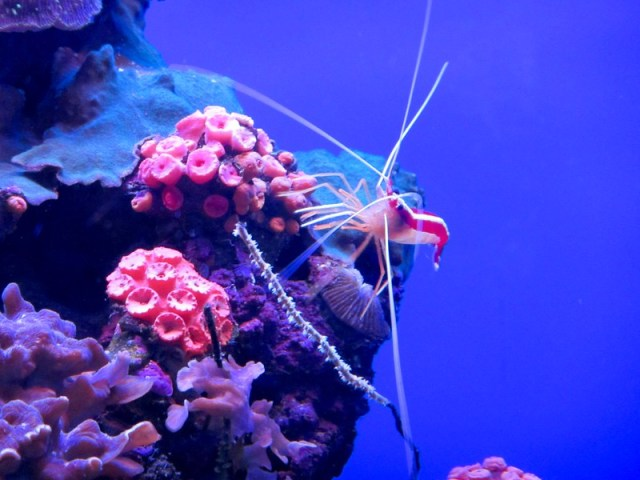 Picture from Maui Ocean Center