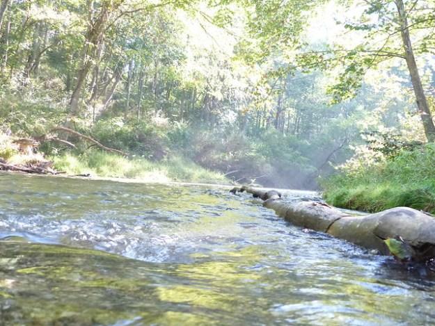 York Rd. Downstream