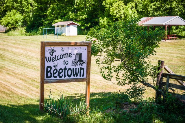 Welcome to Beetown