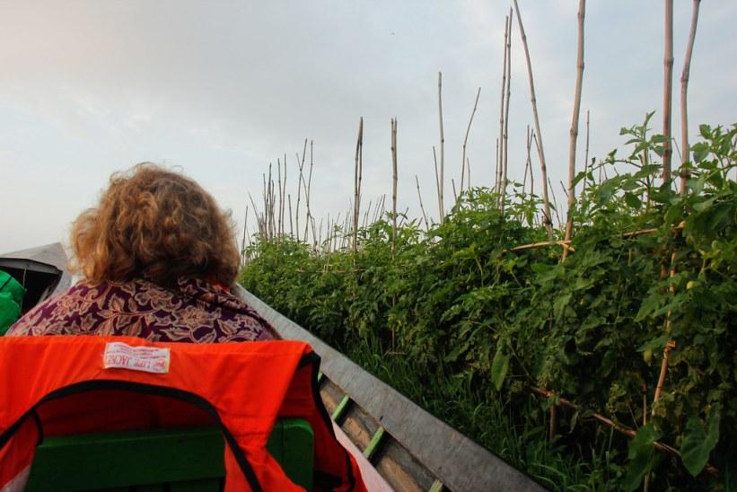 En flydende have på Inlesøen, Myanmar