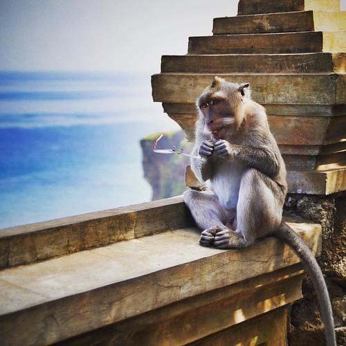Singe chapardeur a Uluwatu. Monkey thief in Uluwatu.??? www.carnets-yann.com  #bali #best_of_bali #uluwatu #uluwatutemple #monkeythief #monkey #singe #wonderful_places #luxuryworldtraveler #instatravel #travelphotos #bestplacest