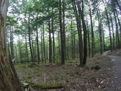 Mill Falls & Beech Grove Hiking Trail