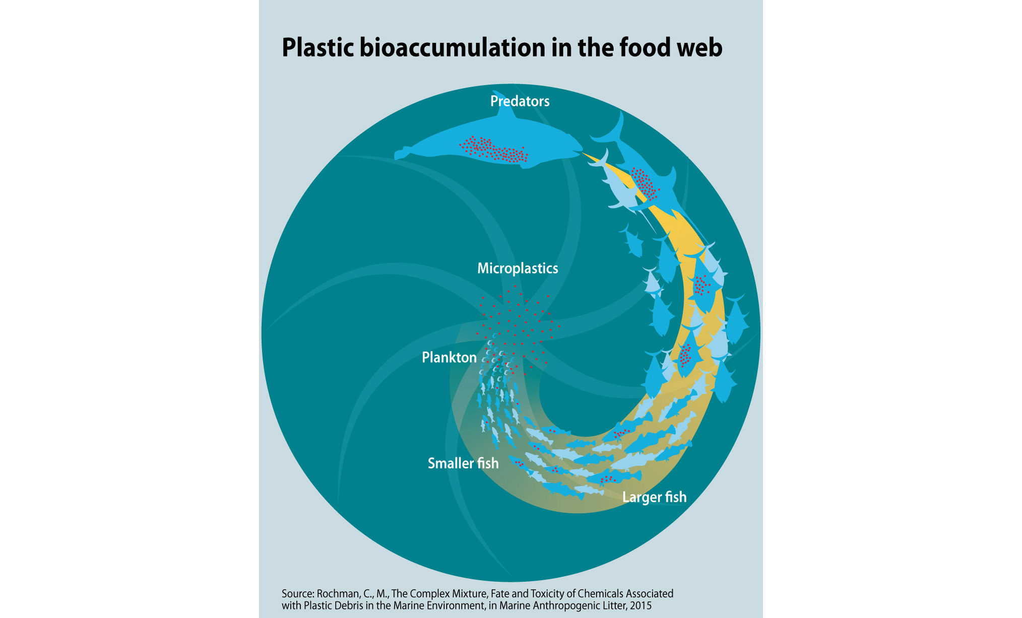 Plastic Bioaccumulation In The Food Web