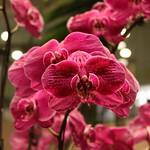 Orchideengarten im Changi Airport Singapur (2)