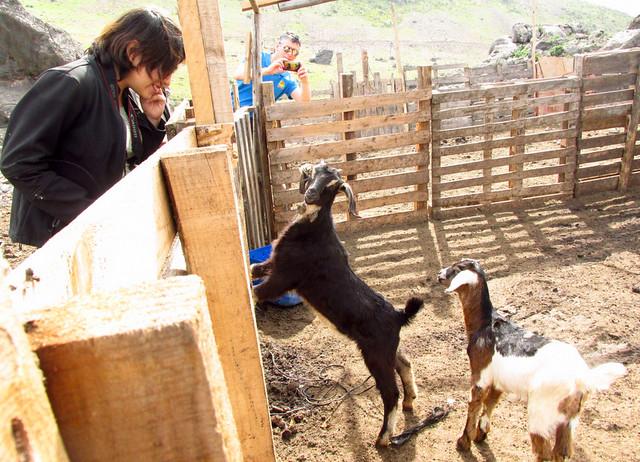 Criancero de Cabras (Camino a Chungungo)