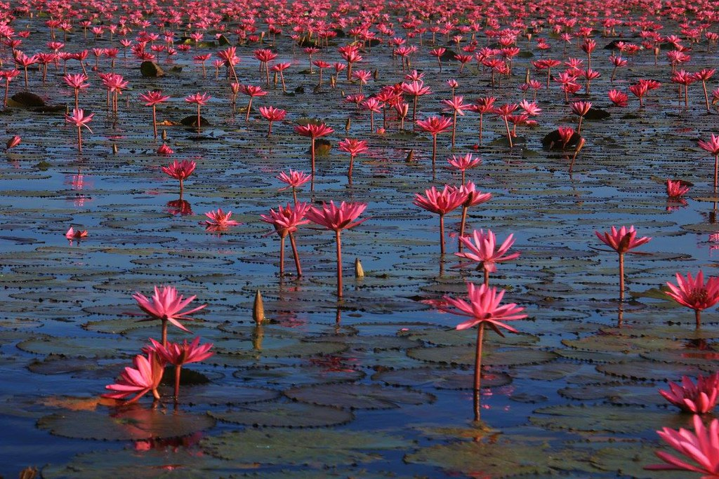 Red Lotus Sea is best visited from December to early March
