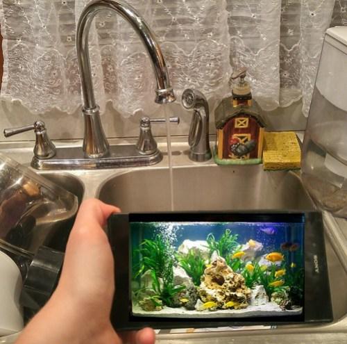 Faucet Fishtank