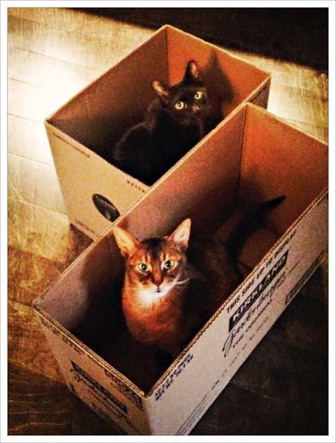 The Costco Cat Traps are a Success! (354/365)