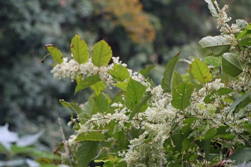 Unknown flower of tree(Atsugi, Japan)