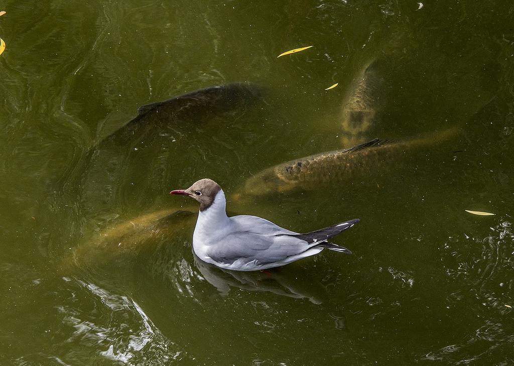 Imagen gratis de algún pez por aquí