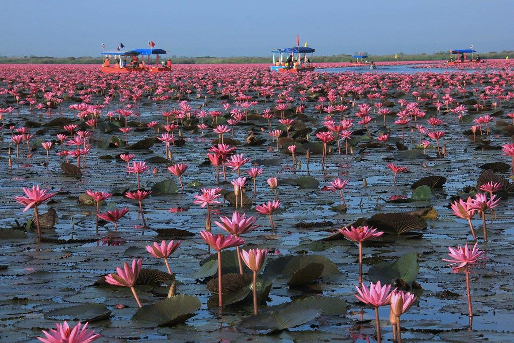 You can go for a boat ride at Red Lotus Sea