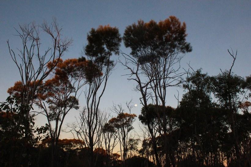 outbacken Australien