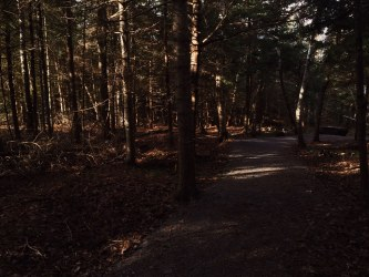Dog path