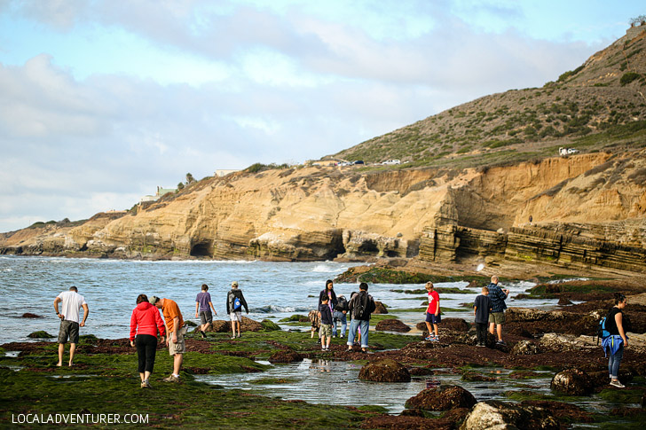 Amazing sea life at cabrillo national monument tide pools for Tides for fishing san diego