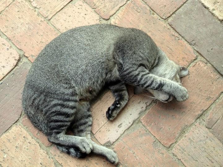Котики Чератинга