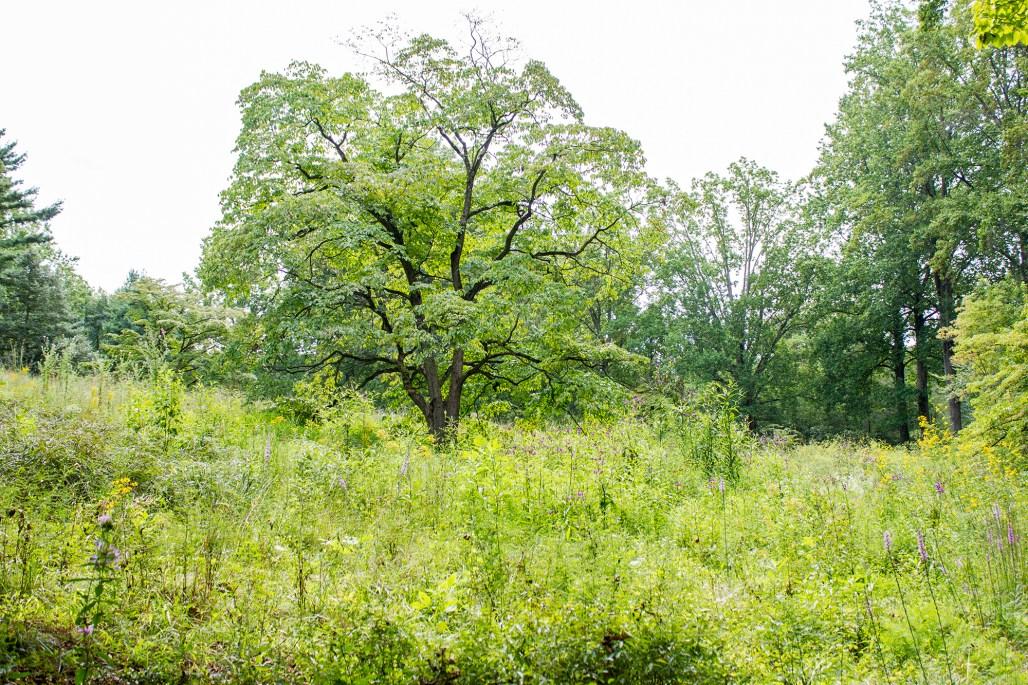 mt-cuba-gardens-delaware-tree