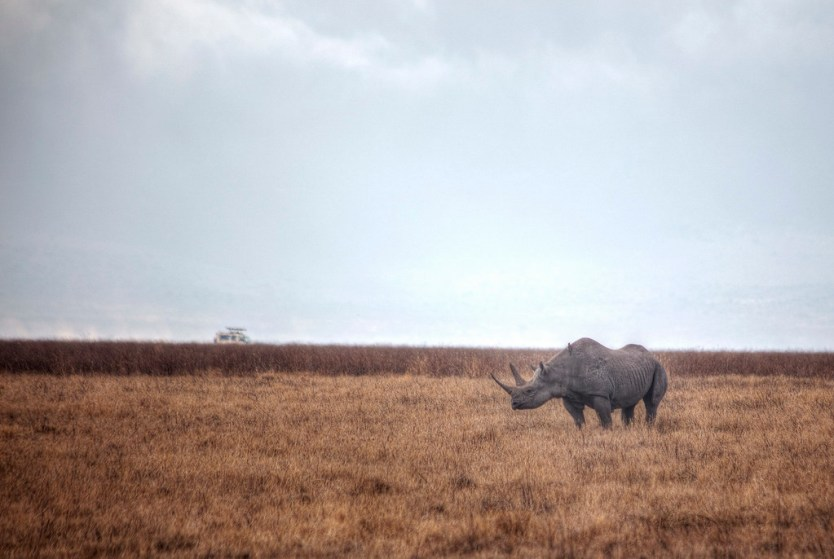 One of the rhino's we saw in the crater
