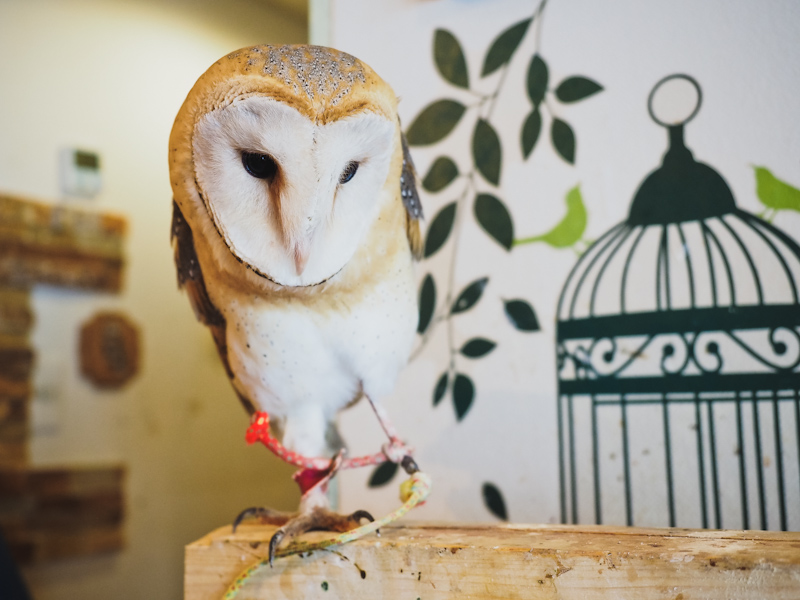 Lucky-Owl-Cafe-Osaka-8