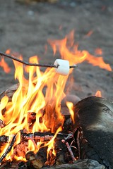 Roasting Marshmallows by ninahale