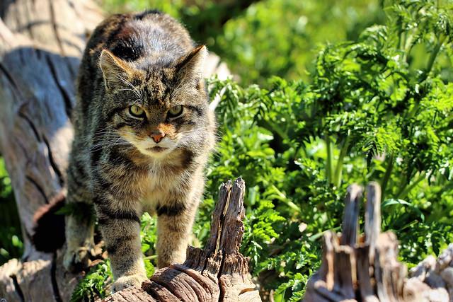 Here kitty, kitty, kitty .................