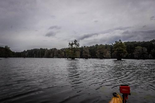 Sparkleberry Swamp with LCU-137
