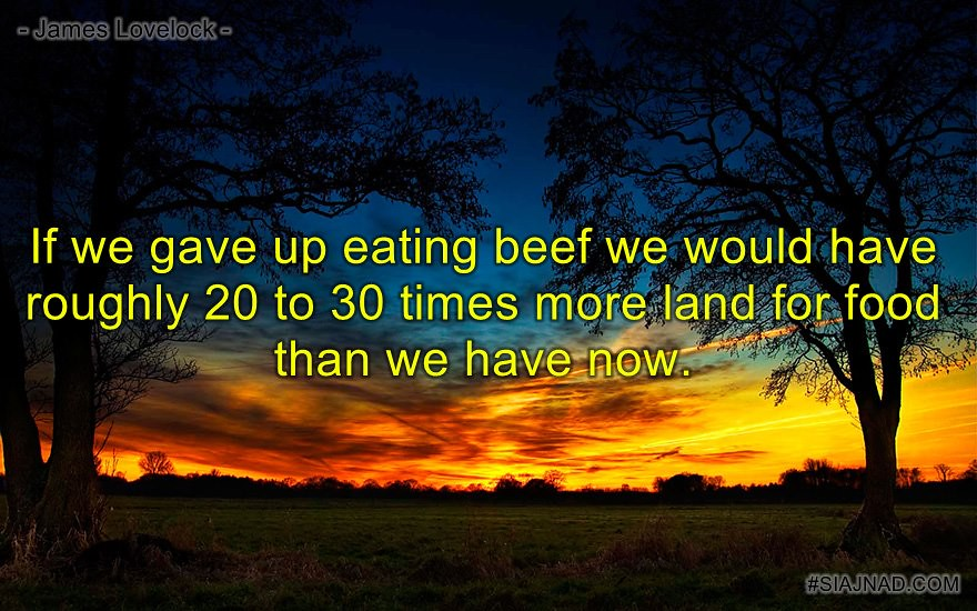 If we gave up eating beef we would have roughly 20 to 30 times more land for