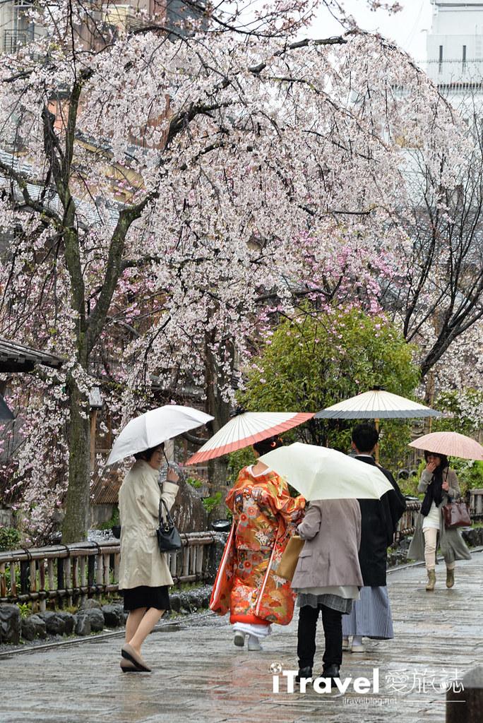 京都赏樱景点 祇园白川 (34)