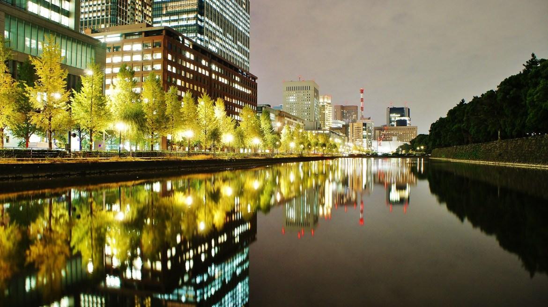 Gingko Biloba Leaves at Tokyo Imperial Palace Grounds
