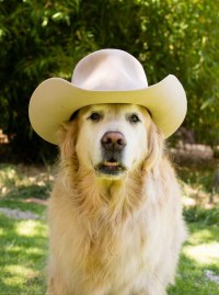 Dogs Wearing Hats