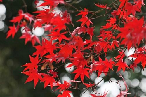 Colored leaves at Jindai Botanical Park, Tokyo, Japan