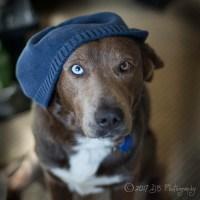 Dogs Wearing Hats