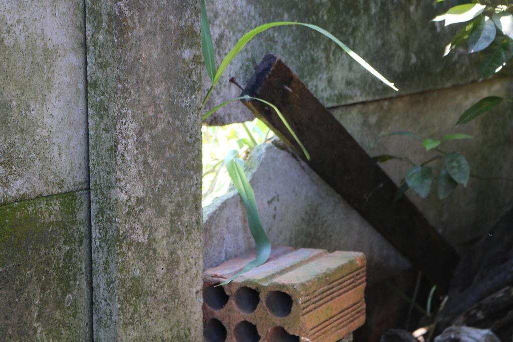 Aterro junto ao muro da APPA leva risco para casas na Vila Portuária 14