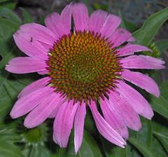garden - June 2006