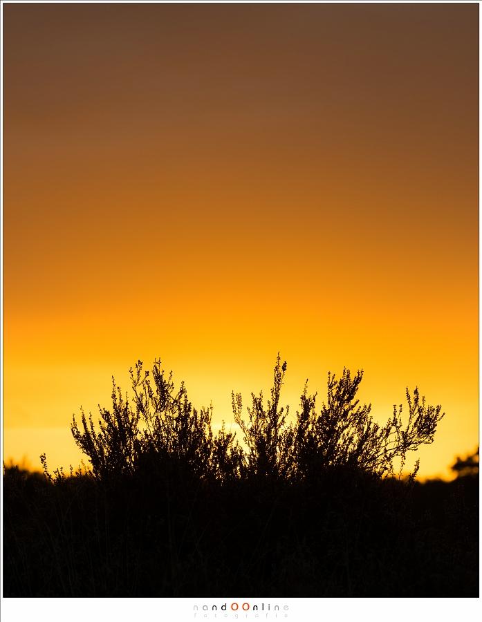 Abstractie: heide in silhouet tegen een prachtige lucht. (130mm - f/8)