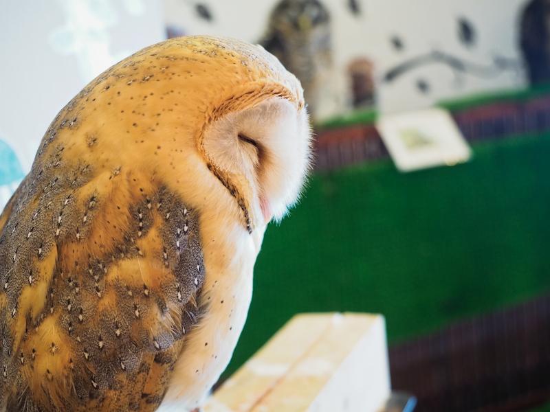 Lucky-Owl-Cafe-Osaka-30