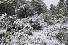 Snijeg, otok Korčula, 16.01.2017.