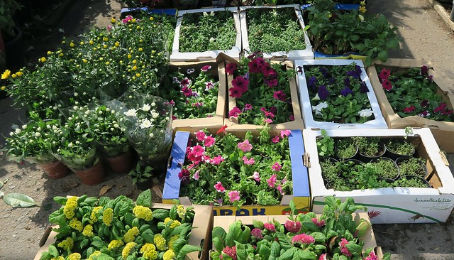 mina souk plants