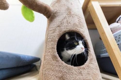 アトリエイエネコ Cat Photographer 25970129547_f6986878d5 1日1猫! 3/10オープン!保護猫カフェけやきさんへ行く(3/3) 1日1猫!  高槻ねこのおうち 里親様募集中 猫写真 猫カフェ 猫 子猫 大阪 初心者 写真 保護猫カフェけやき 保護猫カフェ 保護猫 スマホ カメラ Kitten Cute cat