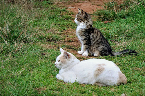 Cats watching birds keenly ...